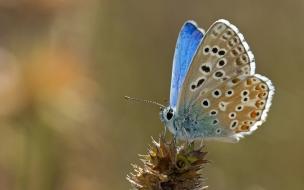 mariposa hermosos colores