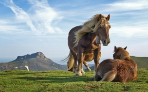 paisaje de caballos