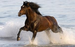 Caballo corriendo en playa