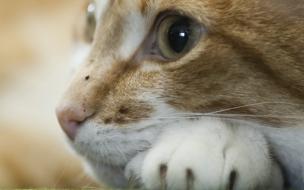 Fondo de pantalla ojos de gato
