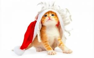 Fondo de pantalla gatito con gorro