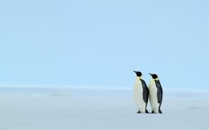Fondo de pantalla pareja de pinguinos en la orilla