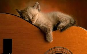 Fondo de pantalla gatito en una guitarra