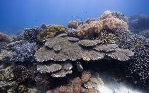 Fondo de pantalla arrecife submarino