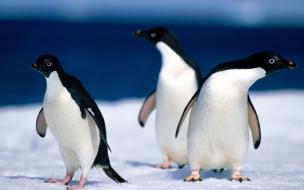 Fondo de pantalla pinguinos curiosos