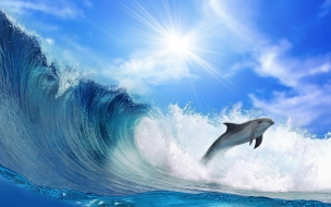 Beautiful wallpaper of a dolphin and a big wave