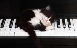 Fondo de pantalla gatito dormido en piano