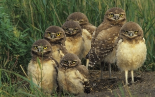 Fondo de pantalla aves graciosas