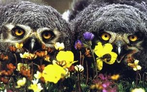 Fondo de pantalla buho en flores
