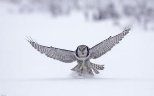 Fondo de pantalla halcon aterrizando