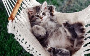 Fondo de pantalla gato en hamaca