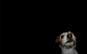 Fondo de pantalla perro en fondo negro