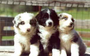 Fondo de pantalla perros tristes y abandonados
