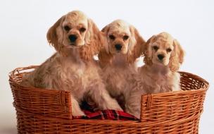 Fondo de pantalla perros con miedo