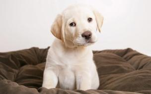 Fondo de pantalla perro en su cama