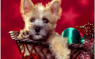 Fondo de pantalla perro navideño