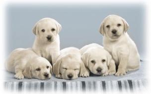 Fondo de pantalla perritos atentos