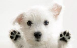 Fondo de pantalla perro parado