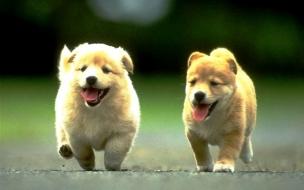 Fondo de pantalla perros corriendo en la calle