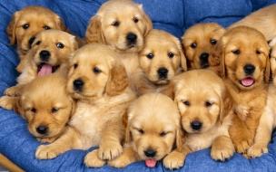Fondo de pantalla manada de perros bebes