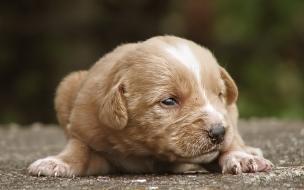 Fondo de pantalla perro bebe esperando