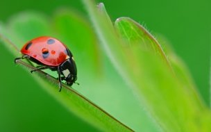 Ladybug cartoon insects animals wallpapers