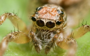 Wallpapers animal spider background