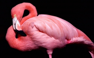 Pink animal wide