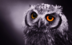 Eagle Owl wallpaper