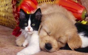 Cute dog and cat Animals Wallpaper Background