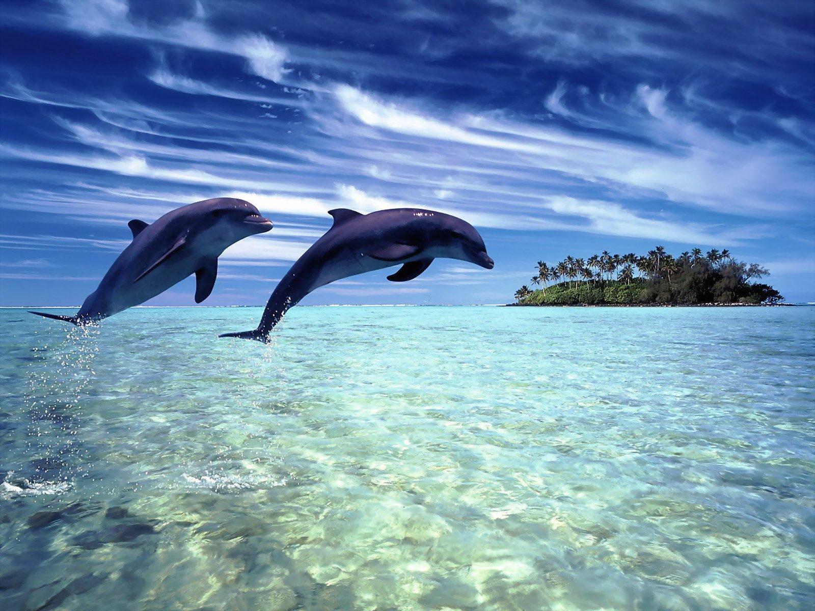 Descubre el curioso mundo marino