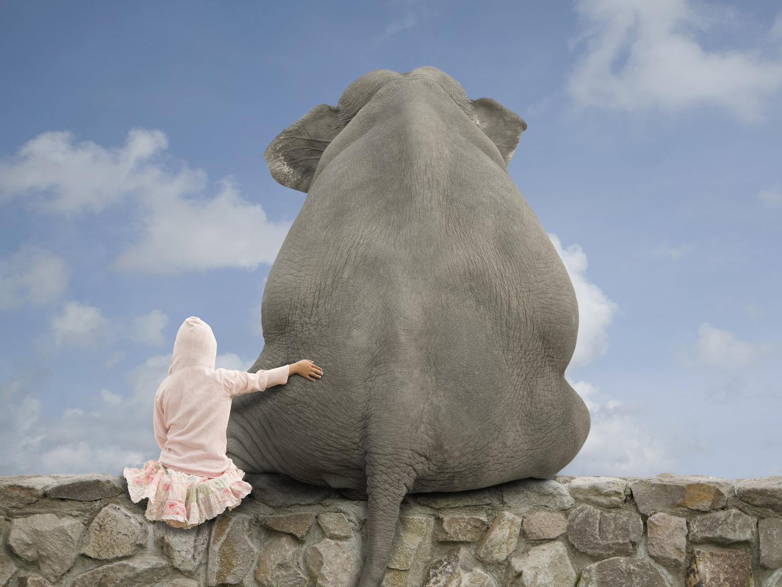 80+ Imagenes de Animales gigantes