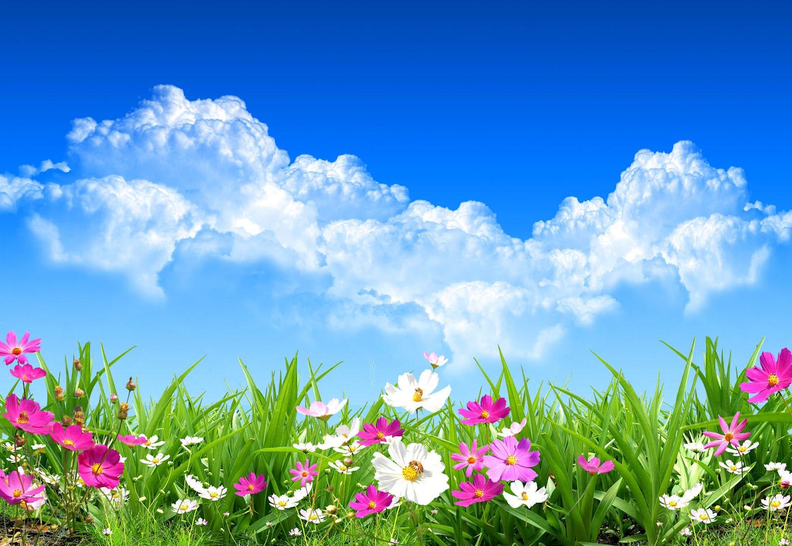 Flores en primavera 1600x1103 fondo de pantalla 2602 - Plantas de temporada primavera ...
