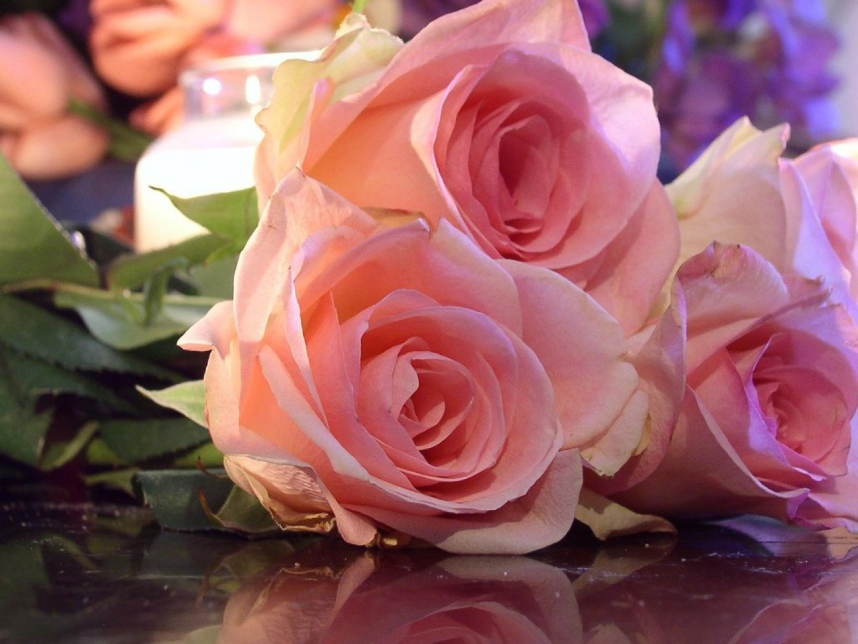 Flores rosas 1440x1080 fondo de pantalla 2603 - Rosas rosas hermosas ...