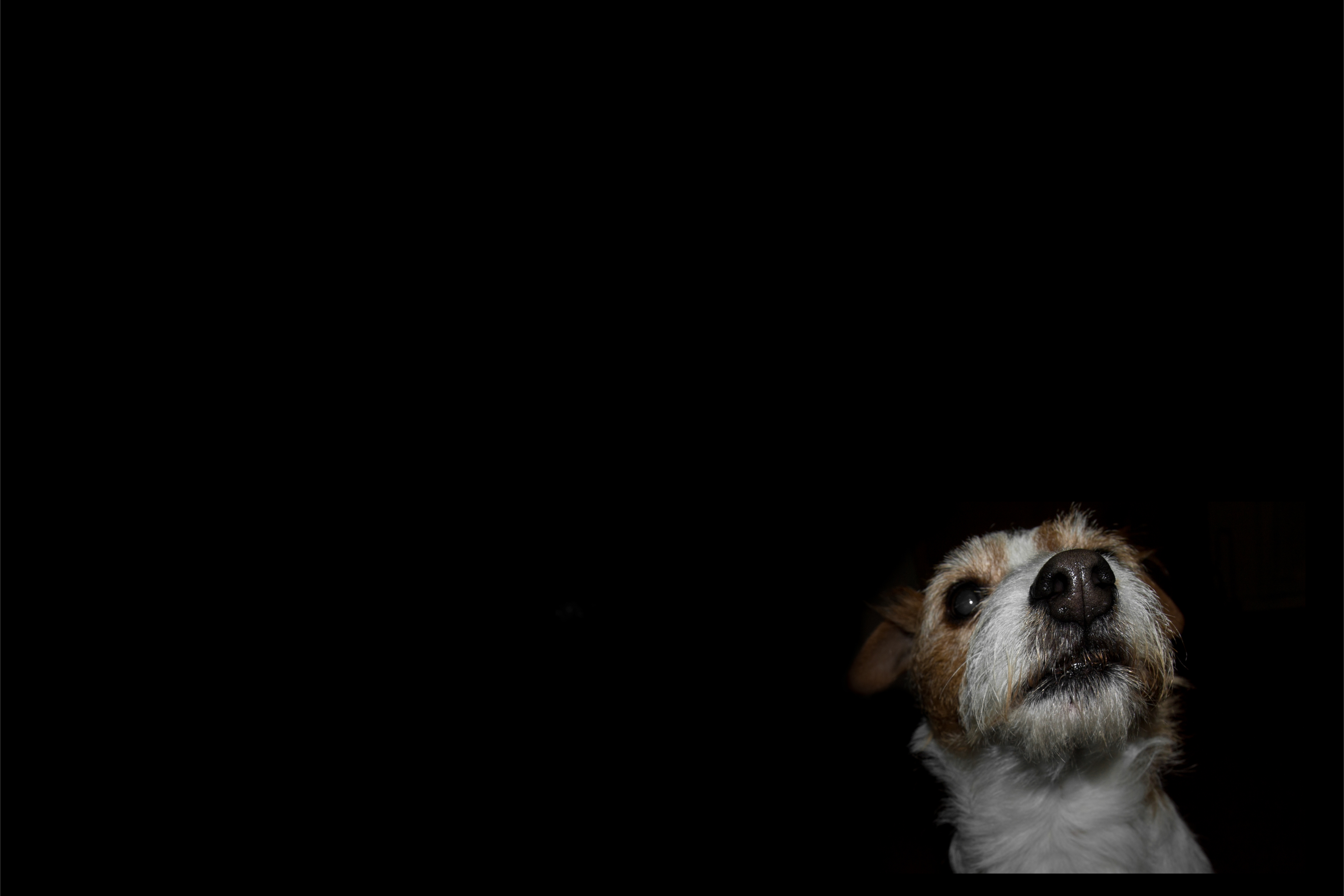 Fondo de pantalla perro en fondo negro 4676x3118 fondo for Fondos de pantalla de perritos