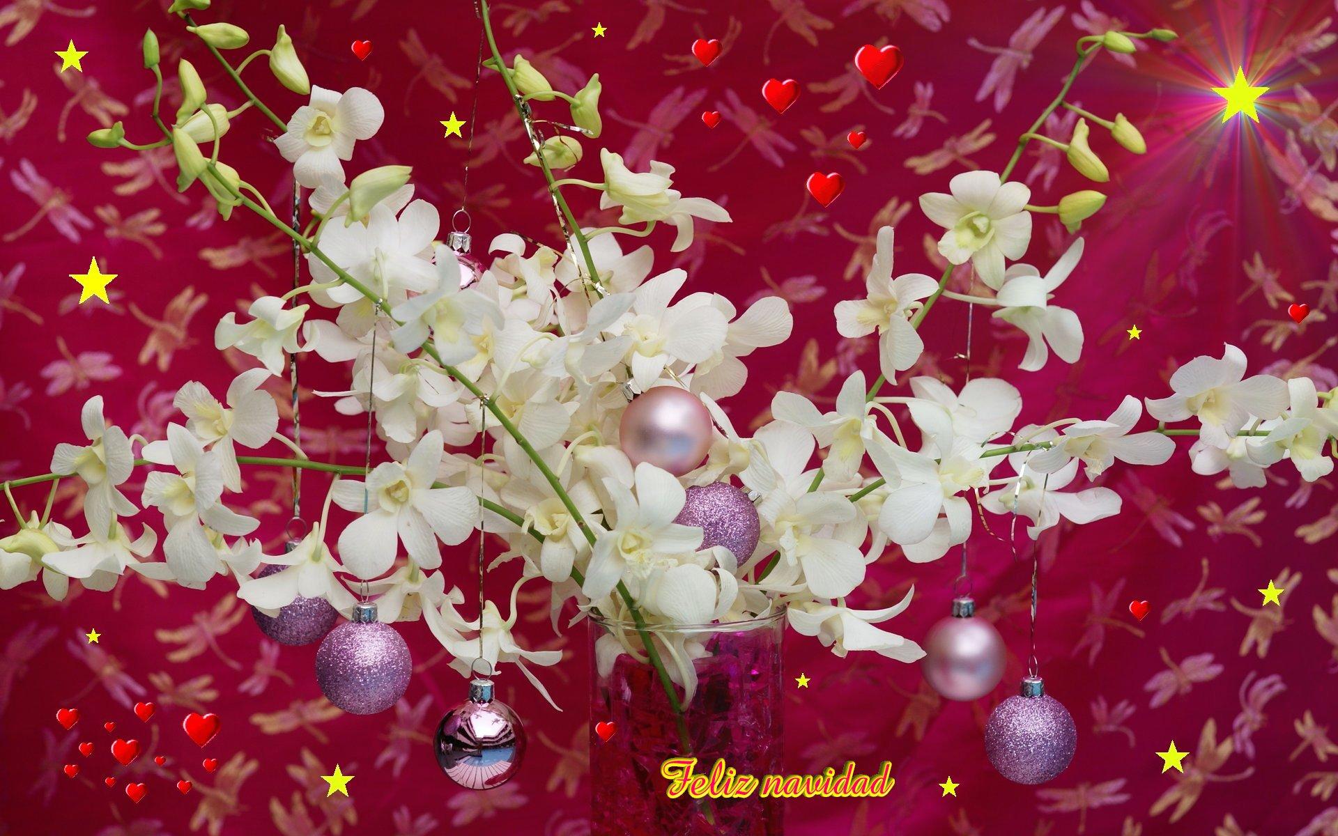 Fondos hd bolitas en flores 1920x1200 fondo de pantalla - Imagenes flores de navidad ...