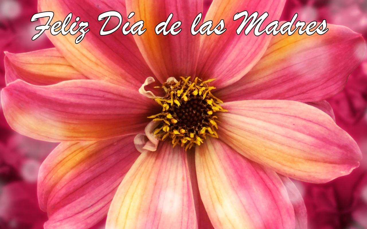 Wallpaper Dia De Las Madres: Feliz Día De Las Madres 1 1280x800