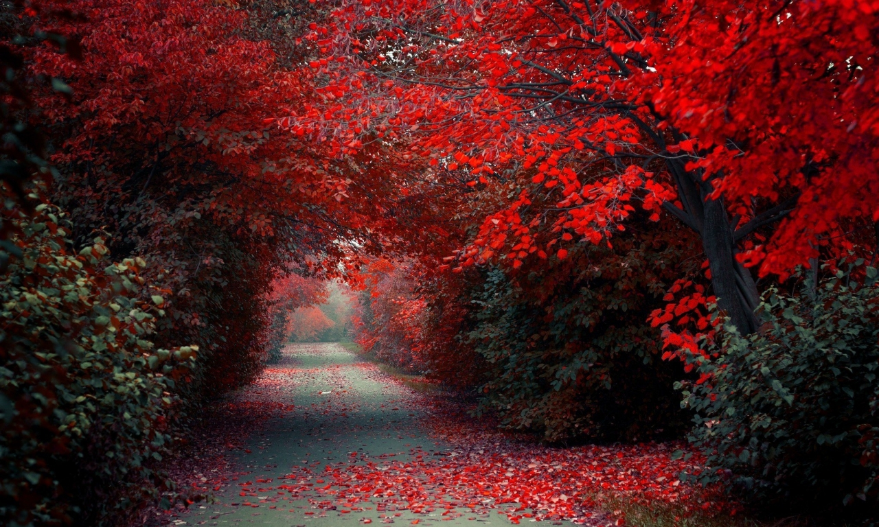 Wallpaper Rojo Y Negro >> Wallpaper de hermoso camino 1280x768 - Fondo de Pantalla #3413